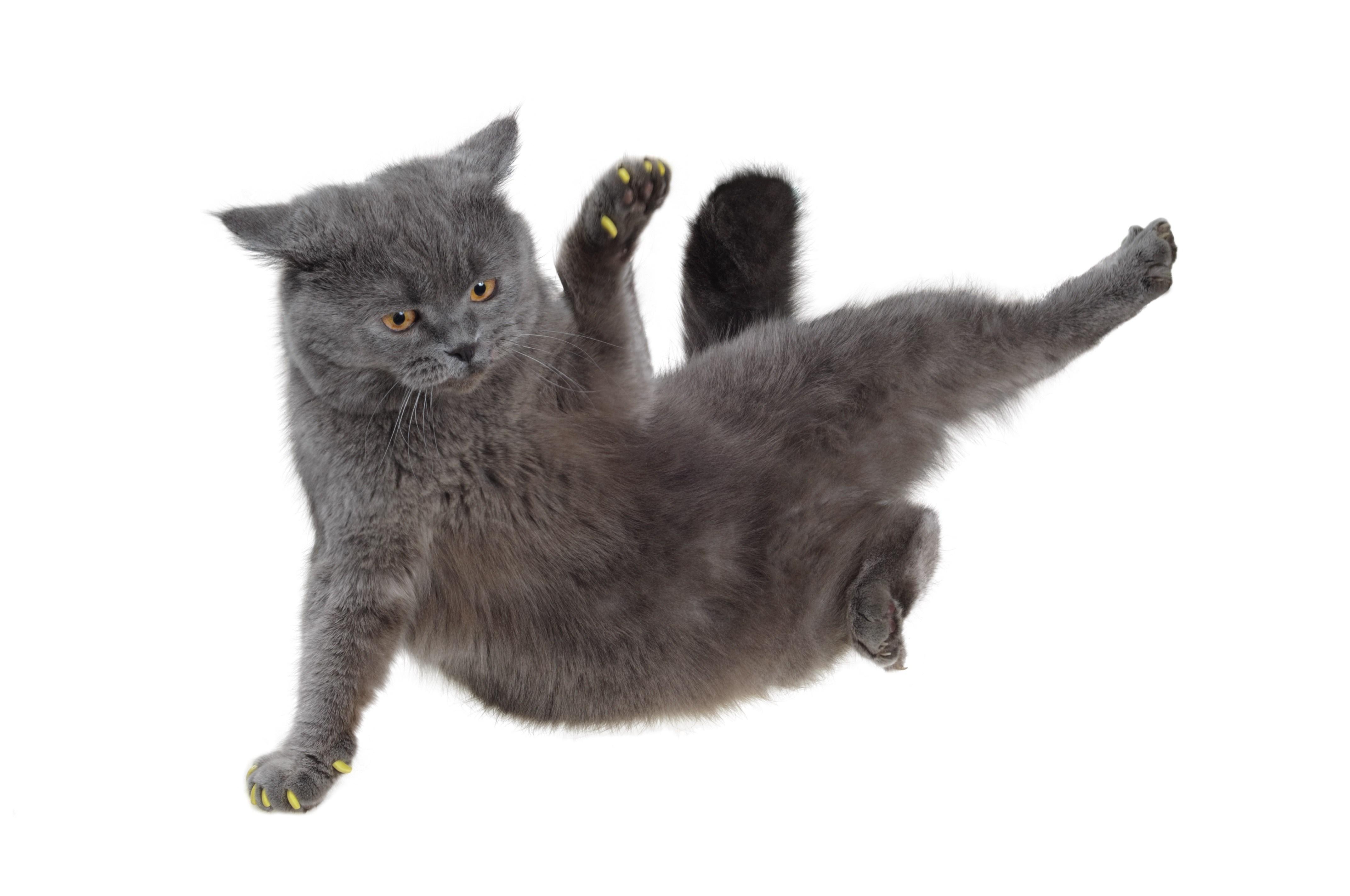 billig katteforsikring